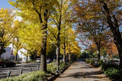 Yokohamanamiki1