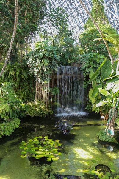 Botanicalgarden5