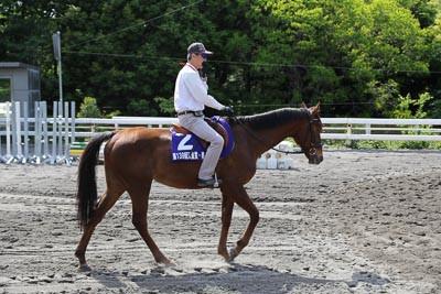 Pony5