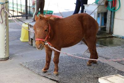 Pony6