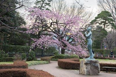 Sakura2