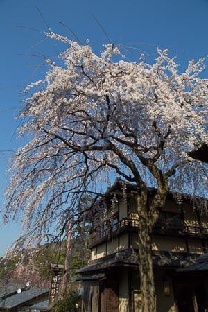 Kyoto9_2